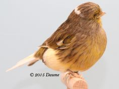 Animals And Pets, Funny Animals, Canary Birds, Serin, Goldfinch, Colorful Birds, Norman, World, Garden