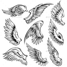 Set of black white bird wings of different shape in open position isolated vector illustration. Editable EPS and Render in JPG for