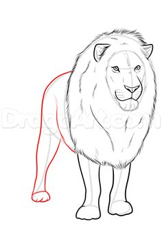 drawing a realistic lion step 9