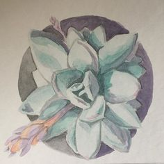 #echeveria #succulents #plants #plantslover #watercolor #watercolorillustration #illustrationoftheday #art #artlovers