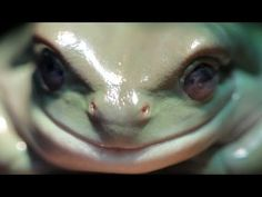 """I love that the narrator sounds a bit like Morgan Freeman, or at least sounds like he's doing an impression of Morgan Freeman narrating a nature documentary  - """"That is how a frog do."""" ~ <3 Michelle M"""