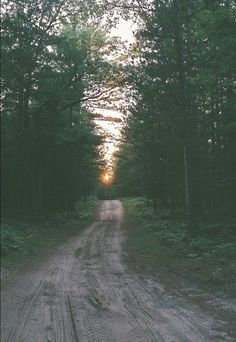 wooded path at twilight