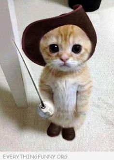 Adorable puss in boots