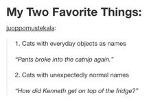 Cats with everyday objects as names