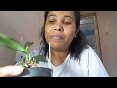 Resultado de orquídea no algodão - YouTube