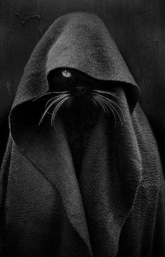 Jedi Cat Black Cat - Photography by Audrey Baschet. Funny Cats, Funny Animals, Cute Animals, Baby Animals, Crazy Cat Lady, Crazy Cats, Ninja Cats, Image Chat, Cat Photography