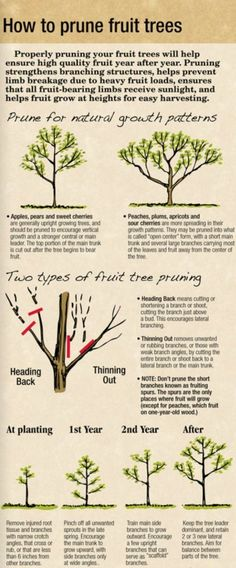 HOW TO PRUNE FRUIT TREES http://arborday.org by roslyn