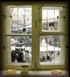 carnetimaginaire: peeping tomcats