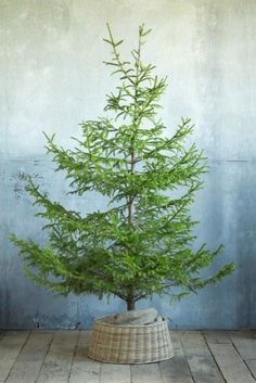 """It reminds me of the children book """"The little fir tree"""".  One of our family favorites at Christmas time. What are your favorite children Christmas books?"""