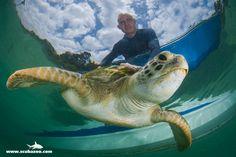A marine biologist f