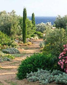 Florez Nursery: Parc de Saleccia, Corsica