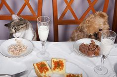 Hidden Holiday Food Dangers for Pets
