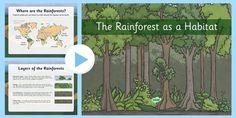 Rainforest as Habitats PowerPoint Where Is The Rainforest, Rainforest Habitat, Eyfs, Teaching Resources, Teaching Ideas, Habitats, World, Forests, Homeschooling