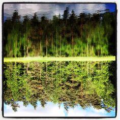 Vihreän eri sävyt metsälammesta / Variety of color #green from the #forest pond.