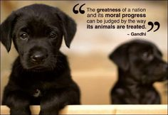 The greatness of a Nation - Gandhi