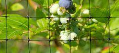 #DIY #bird netting for your garden http://bit.ly/1MgaBeO