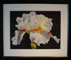 White and Blue Iris, Watercolor, Tanis Bula ($500)
