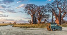 Land Rover with Baines' Baobabs, Botswana