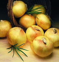 The Texas 1015Y Super Sweet Onion has a great sweet flavor and long shelf life.