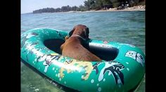 Hilarious Dachshund on holiday.  I think that Jaden's life parallel's this pup's life. Lucky dogs!