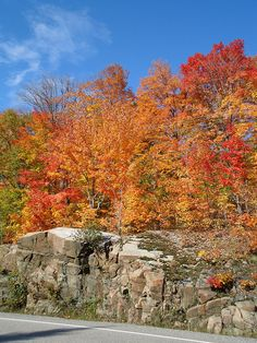 Glorious in all her splendour of colors Muskoka ON CA Great Lakes, Log Homes, Birch, Ontario, Trips, Beautiful Places, Canada, Cottage, Inspire