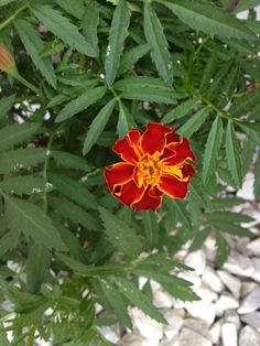 Marigold, Fern, Strong, Content, This Or That Questions, Water, Garden, Easy, Flowers