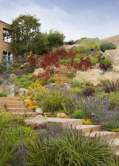 Vote for the Best Professional Landscape Project in the Gardenista Considered Design Awards Tiburon Hillside - contemporary - landscape - san francisco - Arterra LLP Landscape Architects Landscaping With Rocks, Backyard Landscaping, Landscaping Ideas, Steep Hillside Landscaping, Hydrangea Landscaping, Luxury Landscaping, Landscaping Software, Backyard Ideas, Hillside Garden