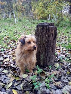 autor: jlez, Poland (tytuł: Natura 9009 - jesień, sad, liście i pies)