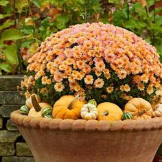 "Give a plain potted chrysanthemum a style boost by surrounding it with small pumpkins and gourds. The ""skirt"" also hides the mum's stems. More ideas for fall container gardens: http://www.midwestliving.com/garden/container/fresh-fall-container-gardens/?page=7"