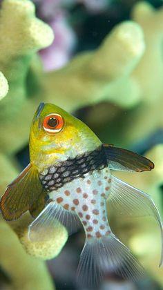 Fish - lovely photo