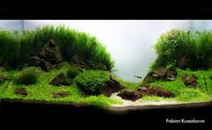 beautiful #aquarium #fish