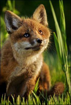 ¡Qué animal más bello! <3