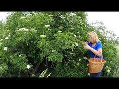 Bazový sirup │Zuzana Machová - YouTube Wicker Baskets, Good Food, Cooking, Youtube, People, Plants, Decor, Syrup, Kitchen