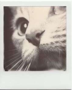 "Impossible Project - ""Miss Cissy Cat"""
