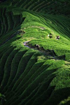 """Dragon's back"", Longsheng, China."
