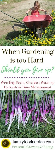 Gardening is hard. Really hard. You get the weeds under control one week and then next week they've taken over again. It can feel like way too much work just to harvest fresh food from your garden. You spend hours choosing seeds, sowing your crops, watering, growing, tending to the weeds and then you finally...