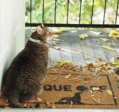 Cats, Animals, House, Gatos, Animales, Kitty Cats, Animaux, Cat, Animal