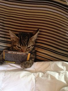 kitten reading in bed
