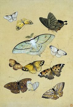 Various Butterflies, from the album Various Insects. Watercolour on paper. Japan, 19th century.