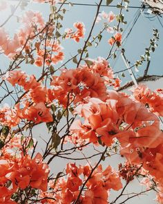 Hi Spring 🌺🌸 (en Los Angeles, California) Collage Mural, Bedroom Wall Collage, Photo Wall Collage, Art Mural, Picture Wall, Picture Collages, Vsco Pictures, Print Pictures, Wall Pictures