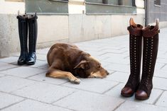 Horse Riding Boots, Long Boots, Equestrian, Horses, Riding Boots, Horseback Riding, Show Jumping, Horse, Long Boots Outfit