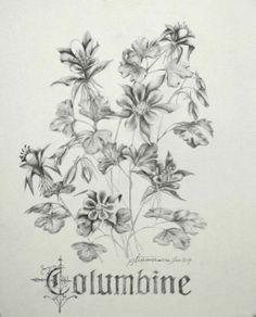 Pencil - Columbine flower
