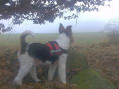 20.11.2012 - Aus: Im Nebel