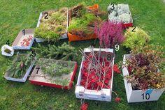 Syksyn somisteet Plants, Plant, Planets