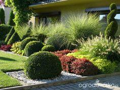 Ogród mały, ale pojemny;) - strona 158 - Forum ogrodnicze - Ogrodowisko Front Yard Garden Design, Front House Landscaping, Garden Yard Ideas, Backyard Landscaping, Boxwood Garden, Evergreen Garden, Back Gardens, Outdoor Gardens, Small Garden Landscape