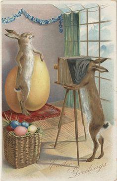 The Bunny Photography Studio