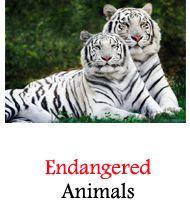 Recently Extinct Animals Gili Island, Extinct Animals, Seo, Islands