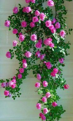 hanging beauty