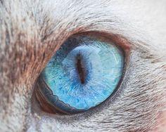 Plongez dans les yeux des chats avec les jolies photographies d'Andrew Marttila, aka Crazy Cat Man, un photographe américain basé à Philadelphie, spécialisé dans les photographies de ces adorables félins. Une série magnifique et envoûtante permettant d'admirer les iris colorés et les pupilles fendues des yeux de chat. À noter qu'ironiquement, Andrew Marttila était allergique aux chats et aux chiens depuis la naissance, mais a décidé de combattre cette affliction, le conduisant finalement à…