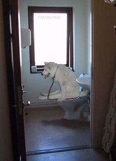 Dogs That Immediately Regret Their Decisions ~This last one had me rolling!
